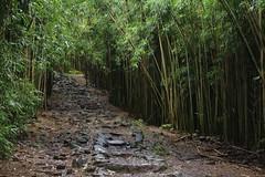 Haleakala National Park: Kipahulu Area