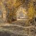 Lobdell Lake Rd_Tree Tunnel-Redo by Barking Dog Photos_Bruce Gregory