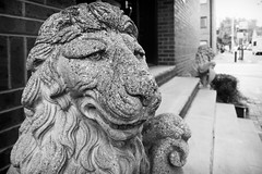 Wise Old Stone Lion