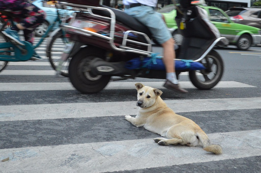 Street dog in Chengdu