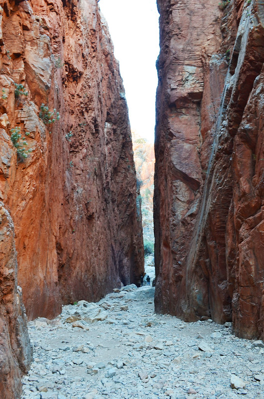 Standley Chasm - Larapinta Trail