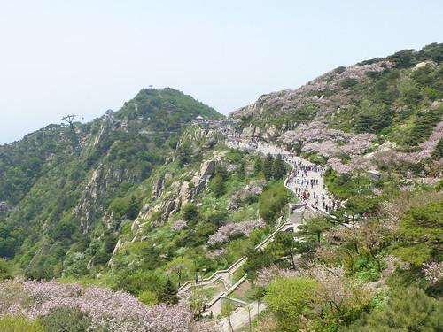 CH-Mont Taishan-Sommet 2-Bixia Temple (3)
