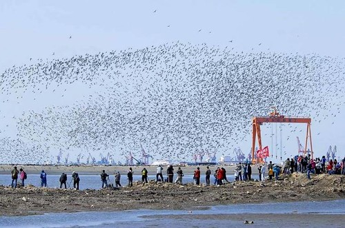 china_shorebirds