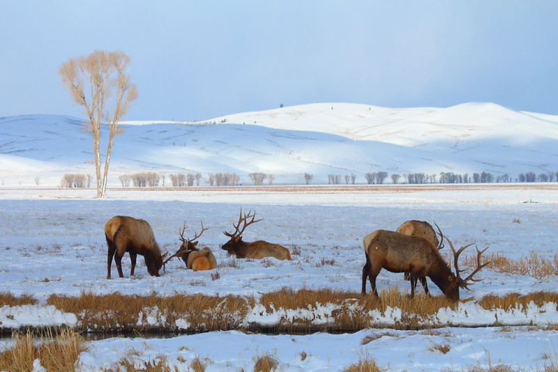 IMG_8866 National Elk Refuge
