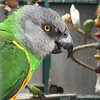 Parrot by quimby