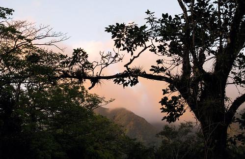 elvalle bromeliads landscapes paisajes sunset atardecer panama cocle plantas plants