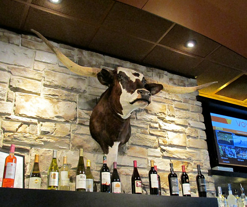 Another view of the longhorn steer