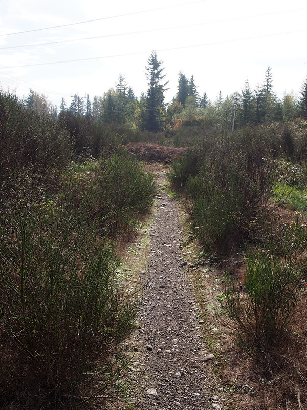 Green-to-Cedar Rivers Trail Extension: The trail right of way continues like this.