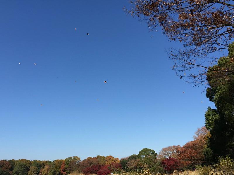 昭和記念公園 Showa Kinen Park-0006