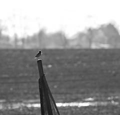 Backlit Bird on a traffic sign