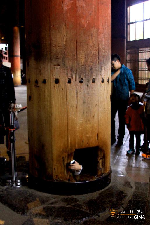【奈良一日遊】東大寺、大佛、公園餵小鹿(梅花鹿)世界文化遺產|韓綜《超人回來了》 小愛路線 @GINA環球旅行生活
