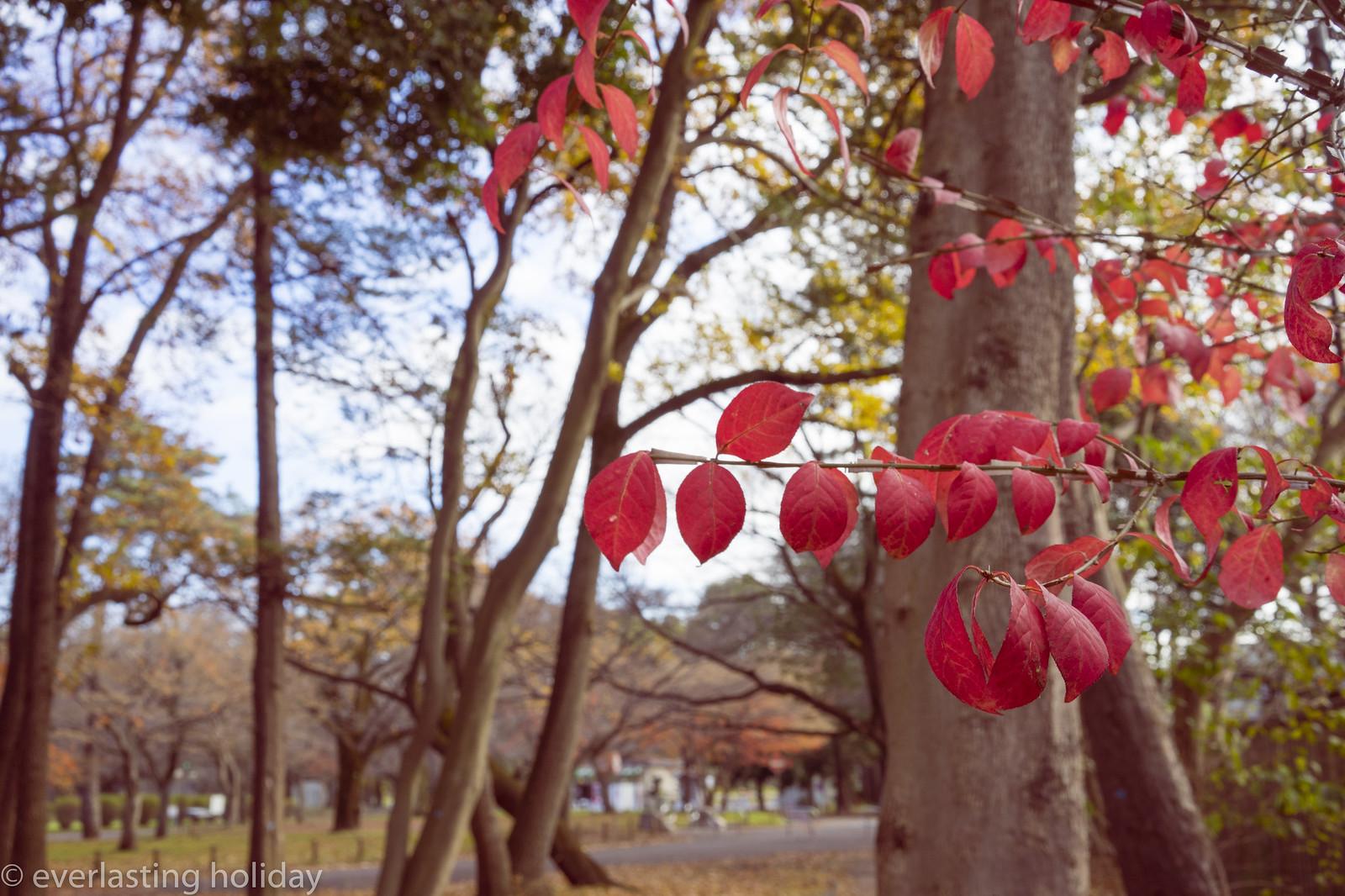 小金井公園 Koganei Park-0013