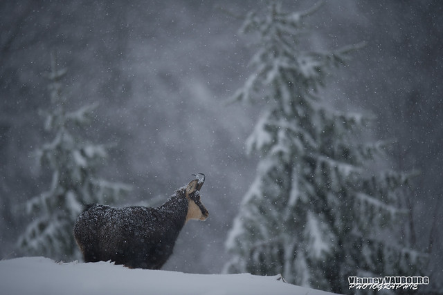 Vaincre le froid, Vosges, Nikon D3S, AF-S Nikkor 400mm f/2.8E FL ED VR