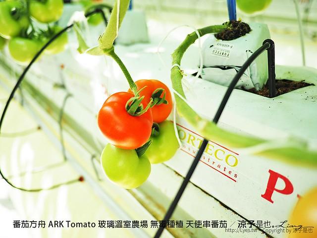 番茄方舟 ARK Tomato 玻璃溫室農場 無毒種植 天使串番茄 40
