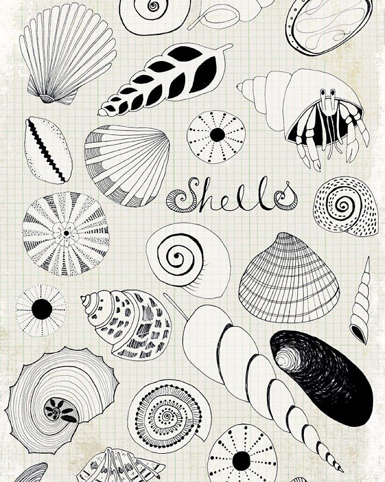Shells..... An Oldy But A Goody. Just Testing Out The