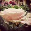 Envie de fleurs. #roses #paris #flowershop