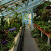 The Greenhouse at Down House by steve whiteley