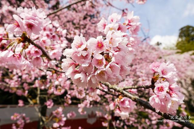 0402D8京都醍醐寺-1160327