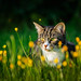 Buttercup Kimi by Michael Turner Photography