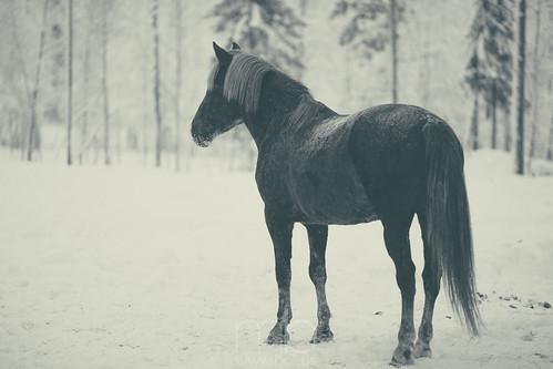 finnland lappland fi kittilä