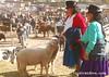 Am Viehmarkt in Otavalo