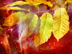 Now Autumn's fire burns slowly along the woods and day by day the dead leaves fall and melt. ..William Allingham
