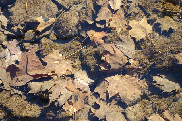 DSC00083 Leaves in Creek