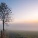 Misty Morning by Markus Trienke