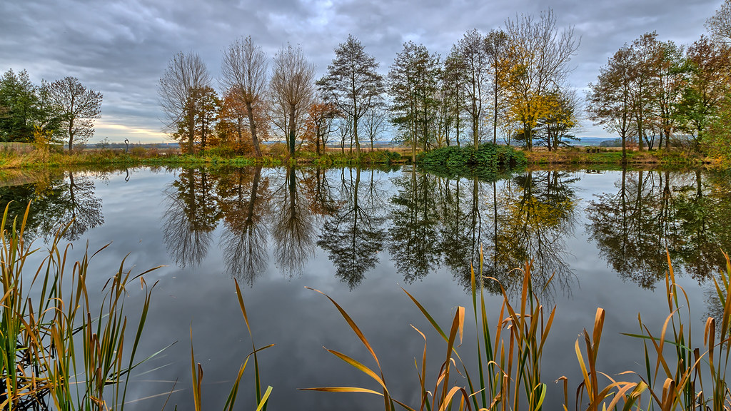Reflections In A Pond