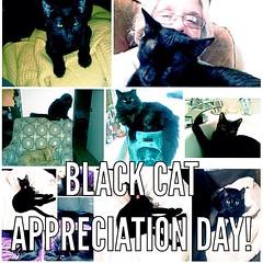 #happyblackcatappreicationday