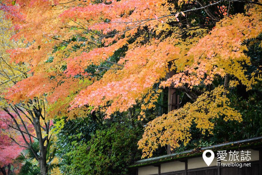 京都賞楓景點 琉璃光院 21