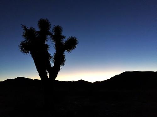 sunset summer silhouette dusk nevada yucca 2015 coldcreek