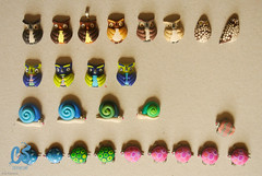 :: Owls, snails and turtles full of colour