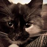 Bellatrix (the evil one)