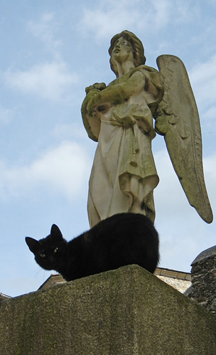 Vivieros, Spain: an angel and a black cat