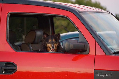 Jasper's driving