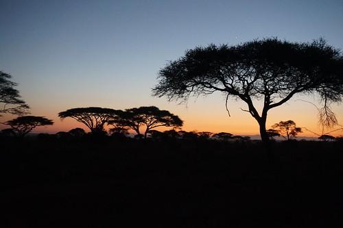 africa kilimanjaro sunrise kenya 2015 amboselinationalpark kibosafaricamp