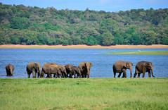 Sri Lanka_035