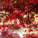 Light ( Happy Halloween weekend) 光 (萬圣節周末愉快) by T.ye