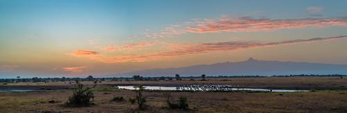 africa panorama mountain sunrise landscape 50mm dawn nikon kenya pano scene safari d750 nikkor wateringhole sweetwaters eastafrica 50mmf18 mountkenya olpejeta sweetwaterstentedcamp