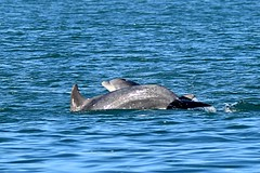 Dolphin survey Nov 2015