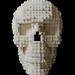Skull by Tom Remy