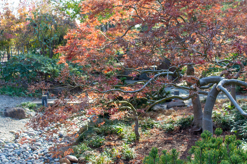 11.21. Shinn Park and Arboretum
