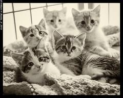 kitten pile 2