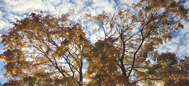 Trees in Autumn