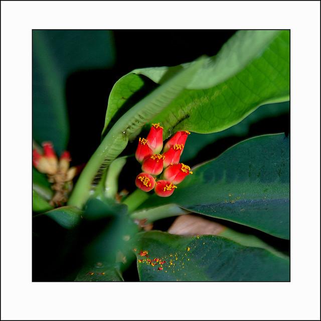 untitled, Nikon D60, AF Zoom-Nikkor 28-105mm f/3.5-4.5D IF