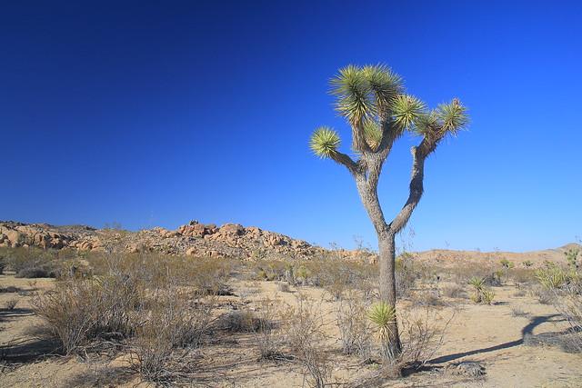 Joshua Tree National Park, Canon EOS 5D MARK III, Canon EF 24mm f/2.8 IS USM