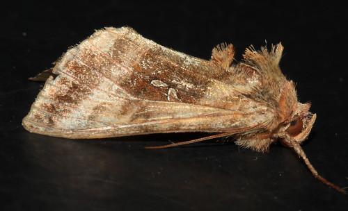 Moth 2456
