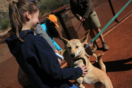 Walking the dingoes Alice Springs Desert Park