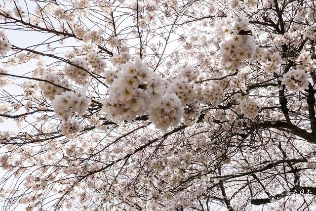 0402D8京都醍醐寺-1160257
